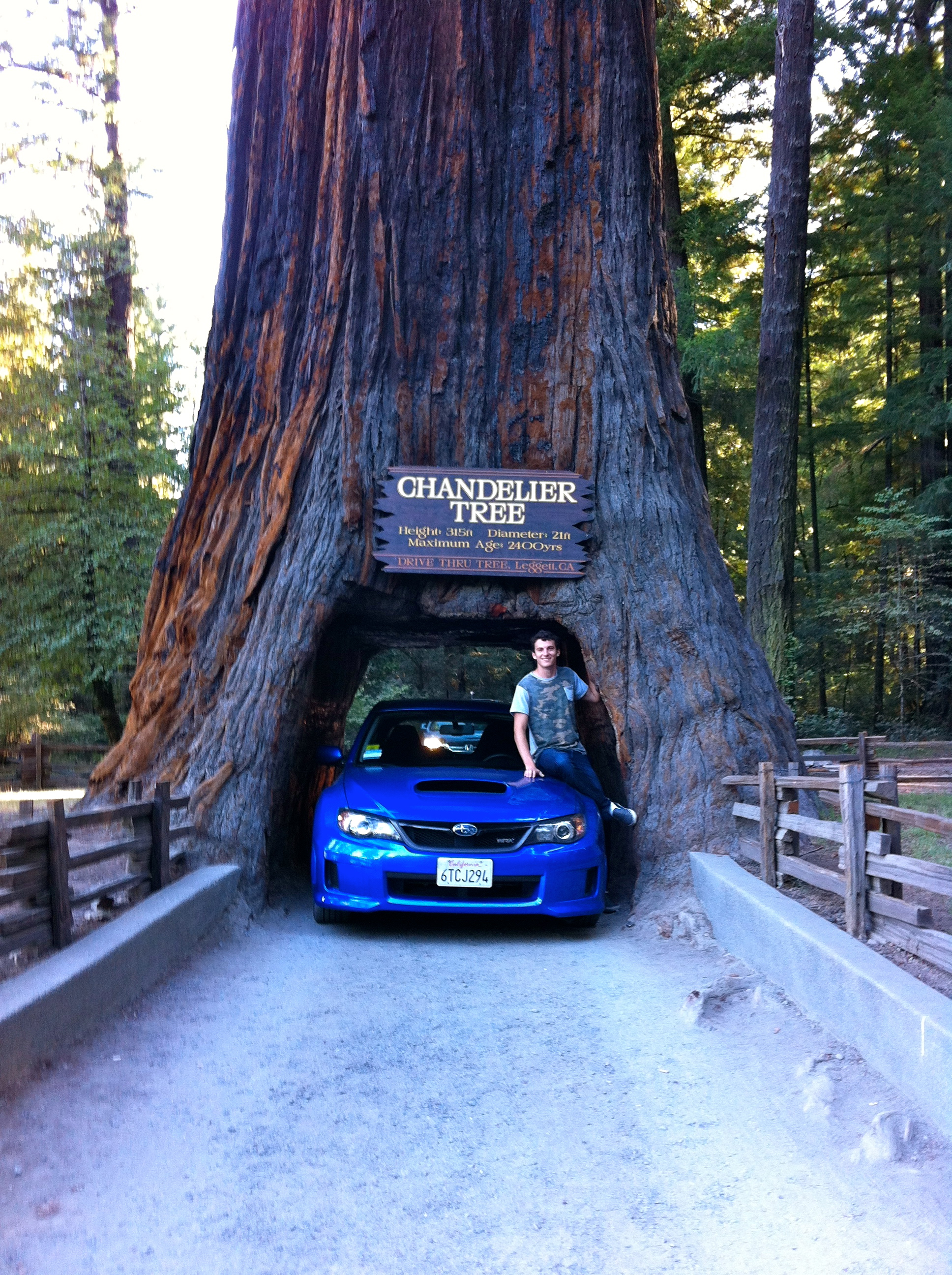 Day 3 the redwood coast bryce casters blog driving through a redwood arubaitofo Gallery