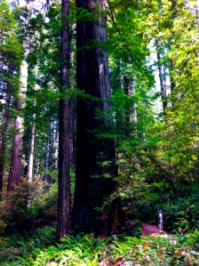 Feeling small in Redwoods NP