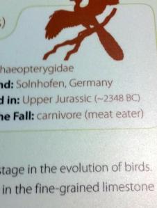 Description from the dinosaur exhibit
