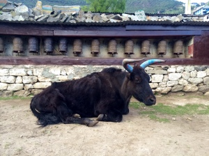 Bull in Namche