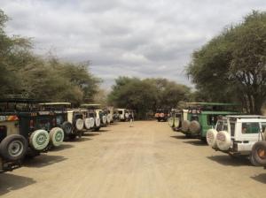 Lots of safaris!