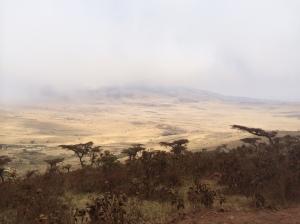 Enter Serengeti