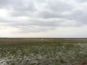 Birding at Lake Manyara