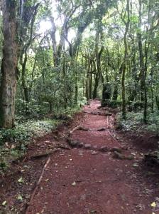 Trail through the jungle