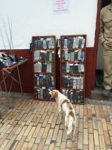 Wild dog and a remote control shop.