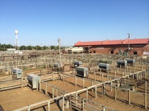 Empty stockyards