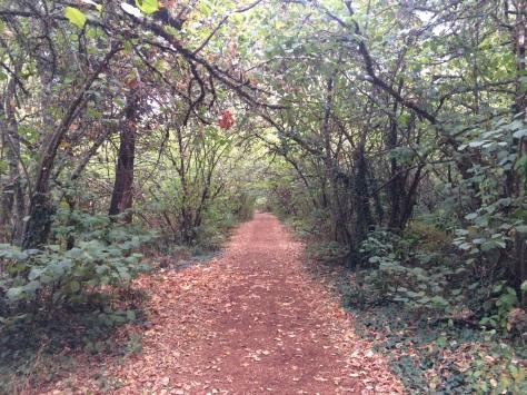 Pre's Trail