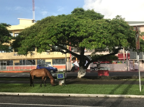 Horses roaming right in the middle of Georgetown.